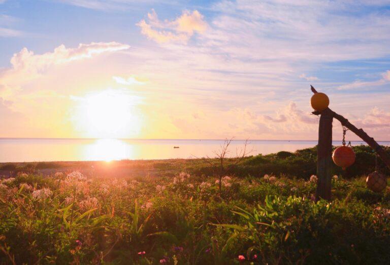 2/9 2月の沖縄といえば